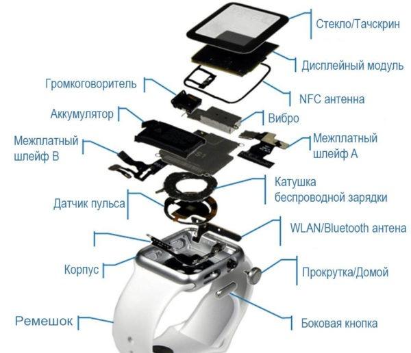 Строение Apple Watch