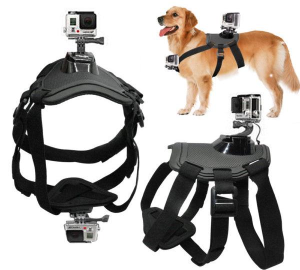 GoPro с креплением для питомцев