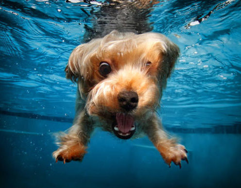 Снимок на GoPro под водой